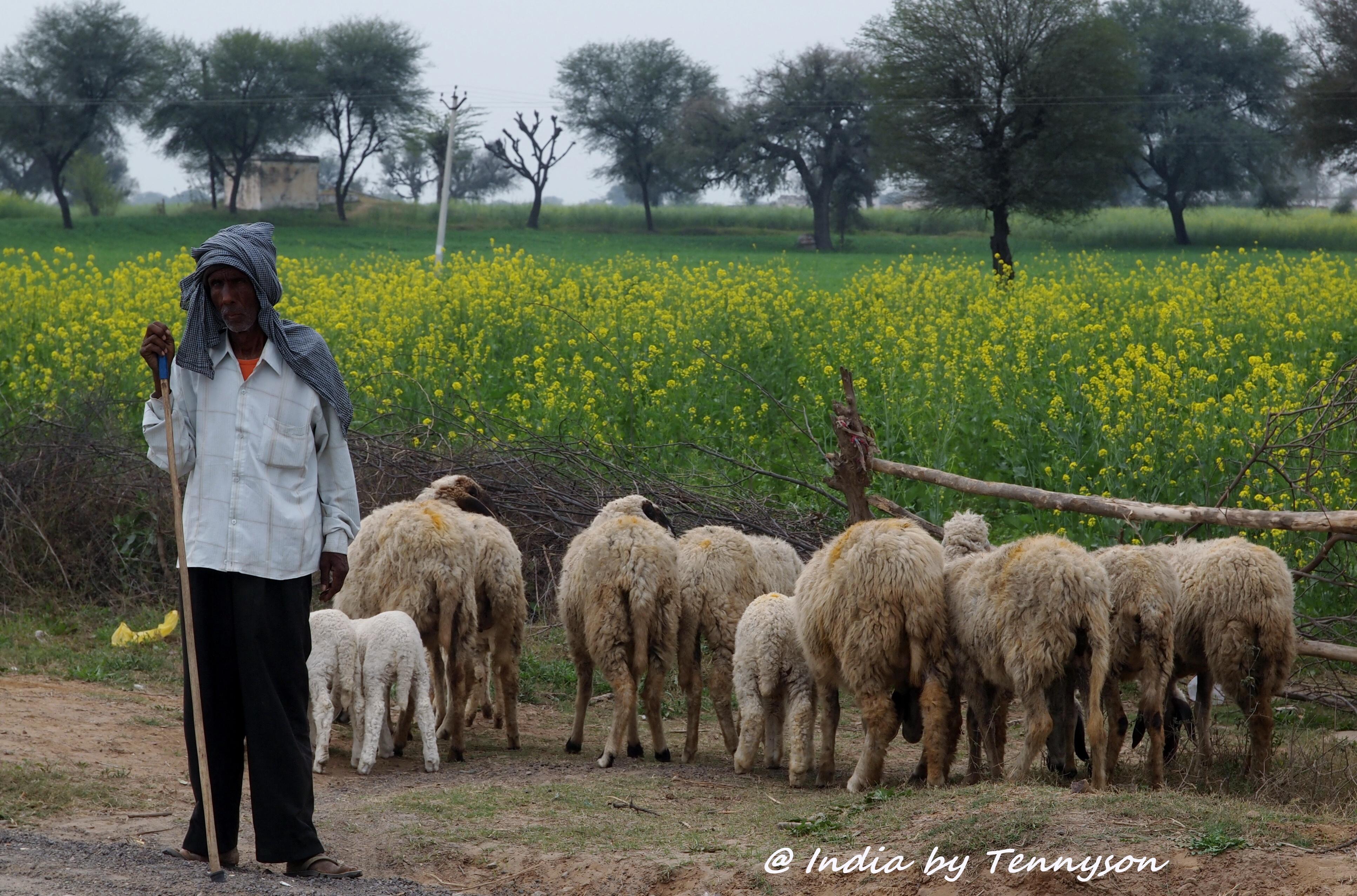 Impressions of India – Animal Bond | Present Moment