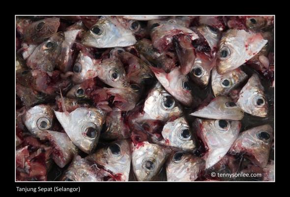 fishery 1