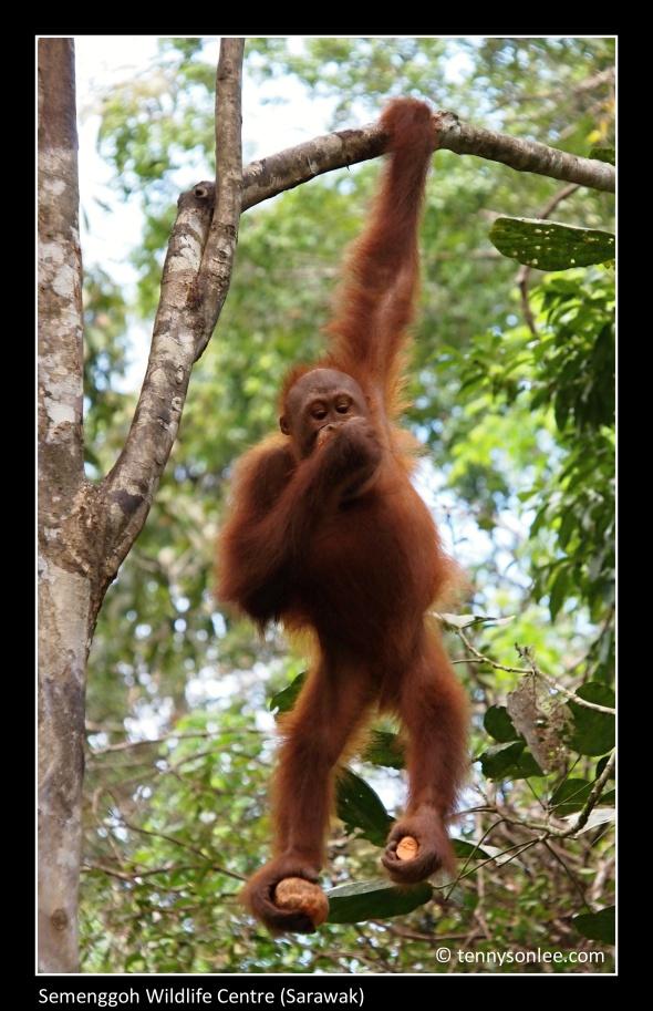 Kuching Sarawak Borneo