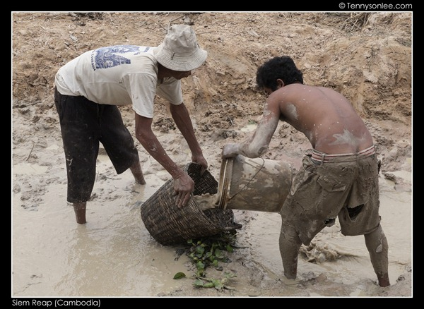 Cambodian (4)