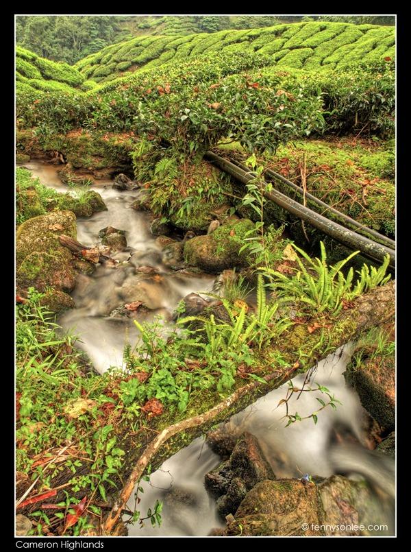 Cameron Highlands Boh Tea Plantation (13)