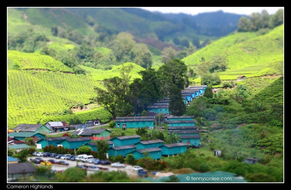 Cameron Highlands Boh Tea Plantation (20)