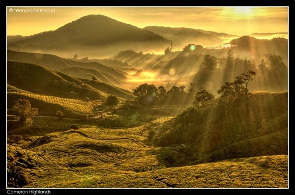 Cameron Highlands Boh Tea Plantation (2)