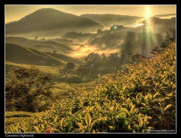 Cameron Highlands Boh Tea Plantation (3)