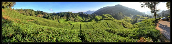 Cameron Highlands Boh Tea Plantation (6)