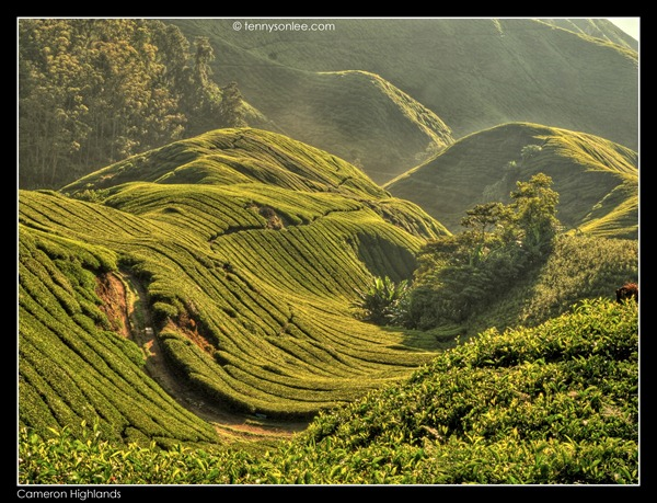 Cameron Highlands Boh Tea Plantation (7)