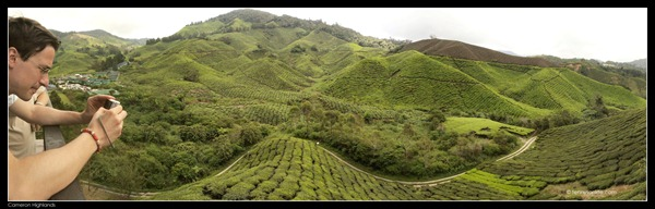 Cameron Highlands Boh Tea Plantation (8)