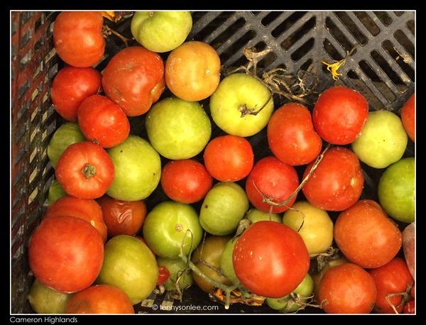 Cameron Highlands Crops (2)