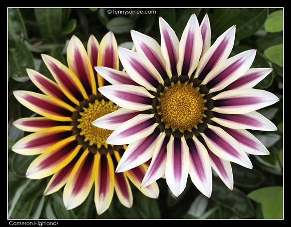 Flower (13)
