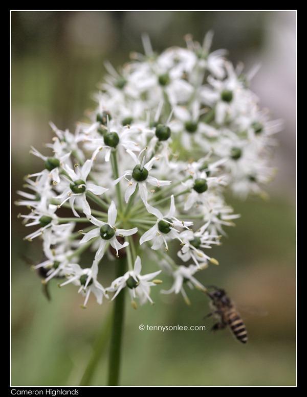 Flower (14)