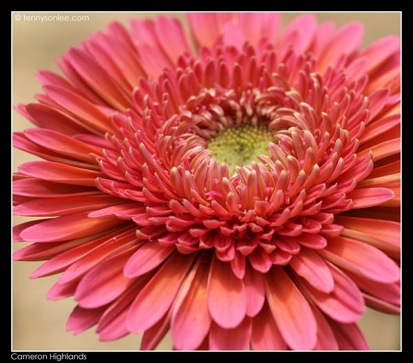 Flower (9)
