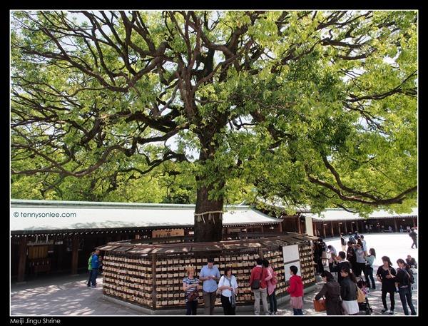 Meiji Jingu Shrine (4)