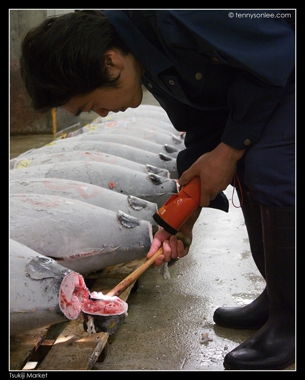 Tsukiji Market Tuna Auction (1)