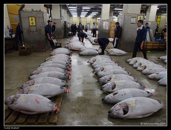 Tsukiji Market Tuna Auction (2)