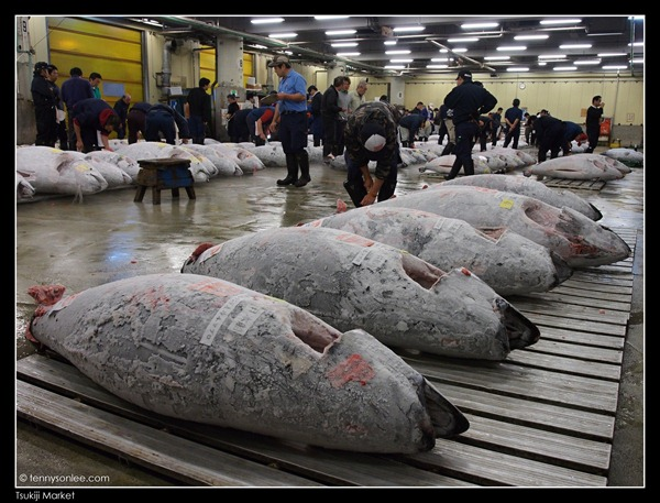 Tsukiji Market Tuna Auction (6)