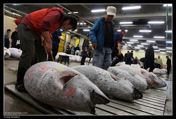 Tsukiji Market Tuna Auction (7)