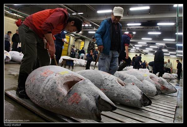 Tsukiji Market Tuna Auction (7)