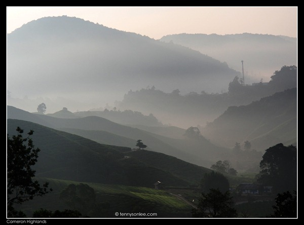Cameron Highlands (10)