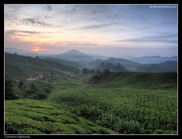 Cameron Highlands (8)