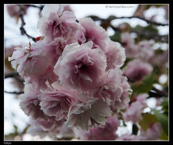 Flora at Tokyo (10)