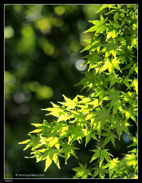 Flora at Tokyo (5)