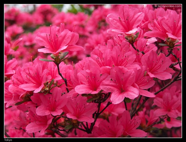 Flora at Tokyo (8)
