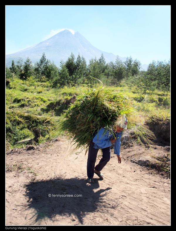 Mount Merapi (7)