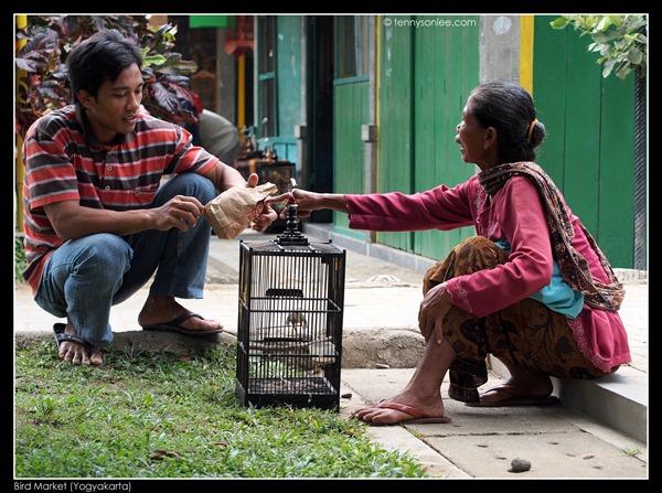 Yogyakarta Bird Market (12)