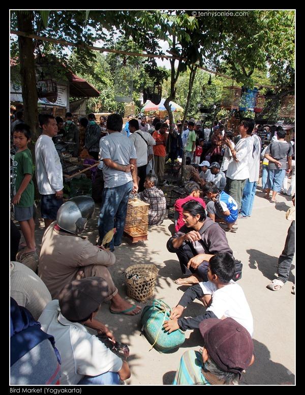 Yogyakarta Bird Market (13)