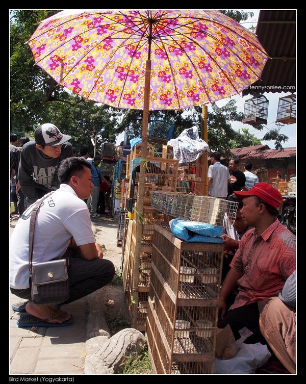 Yogyakarta Bird Market (14)