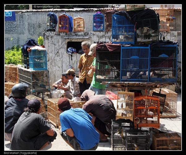 Yogyakarta Bird Market (15)