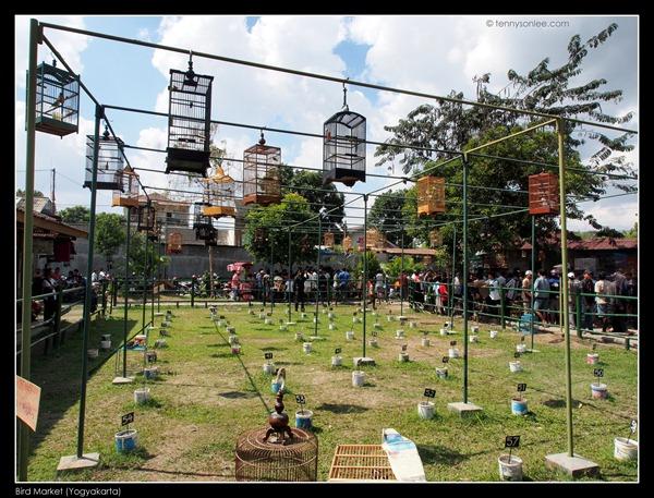 Yogyakarta Bird Market (18)