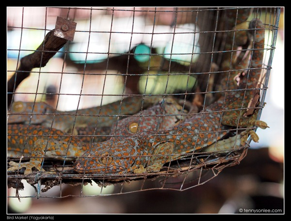 Yogyakarta Bird Market (4)