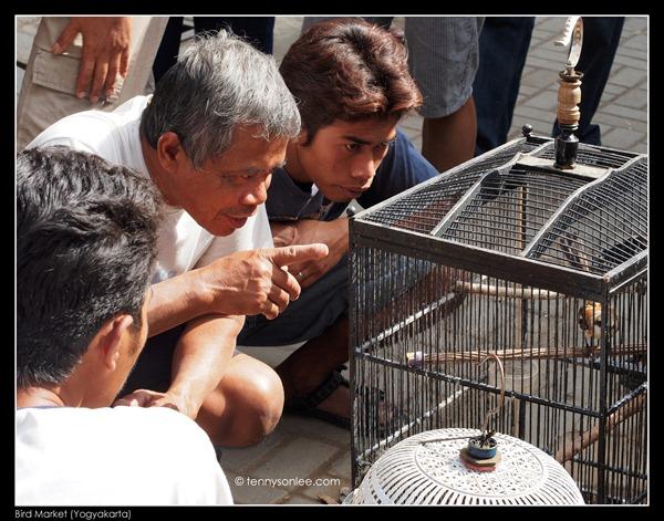 Yogyakarta Bird Market (6)