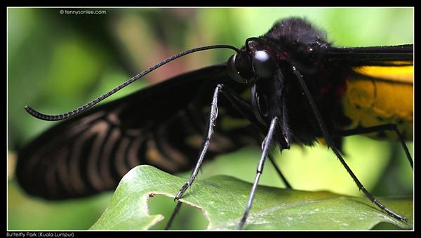 KL Butterfly Park (8)