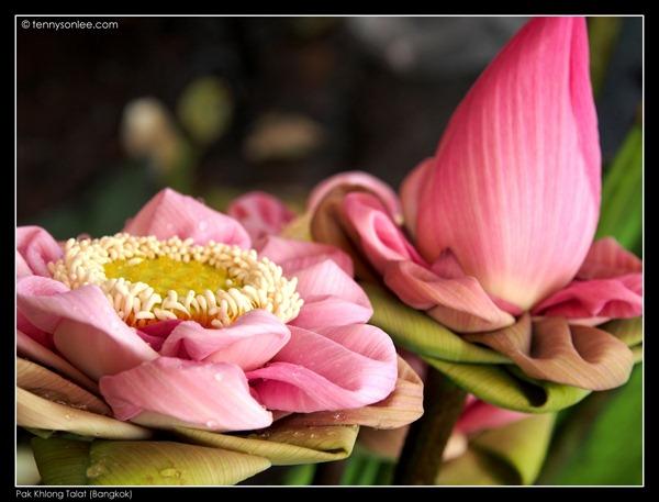 Pak Khlong Talat Flower Market (2)