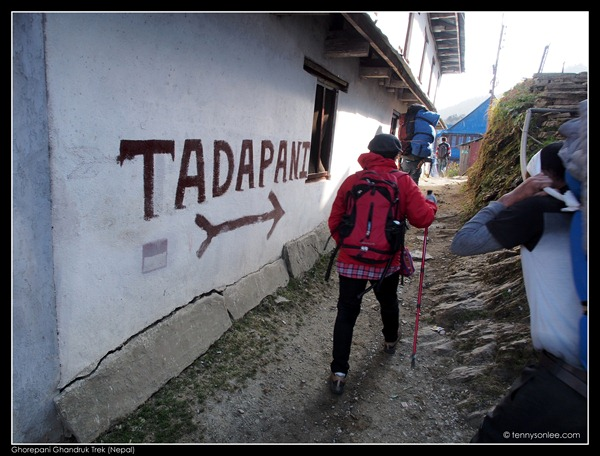 Deurali pass to Tadapani (5)