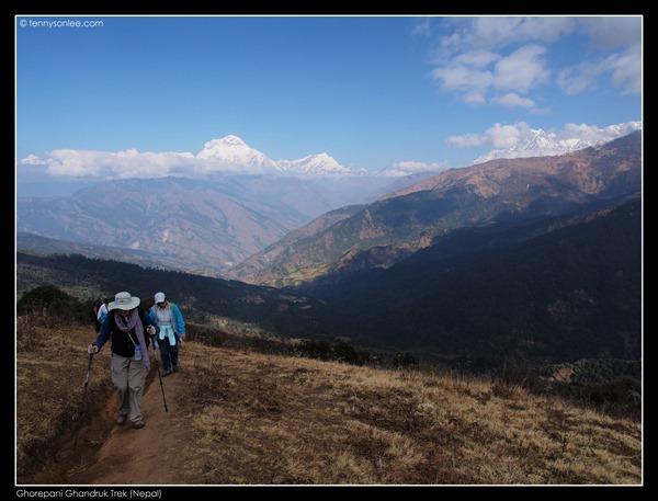 Deurali pass to Tadapani (9)
