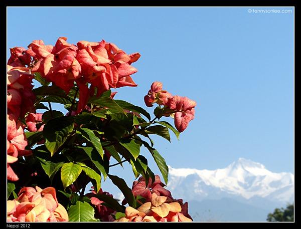 Fish-tail Lodge Pokhara (3)