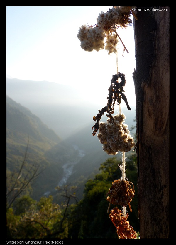 Ghorepani Ghandruk Trek (2)