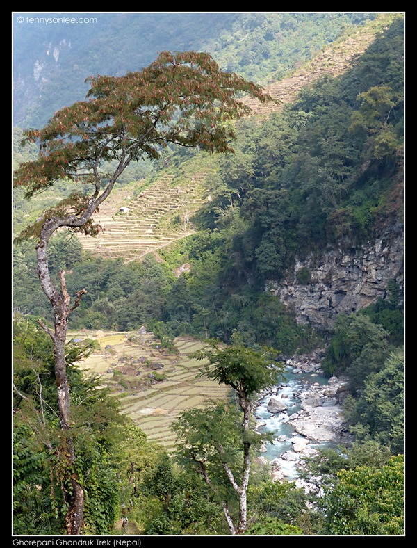 Ghorepani Ghandruk Trek (5)