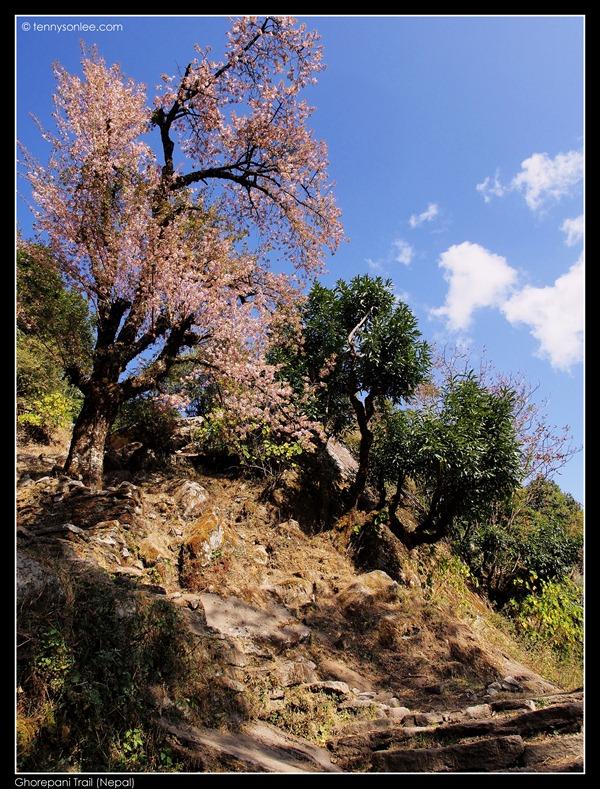 Ghorepani Trail (10)