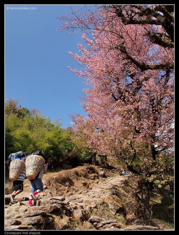 Ghorepani Trail (14)
