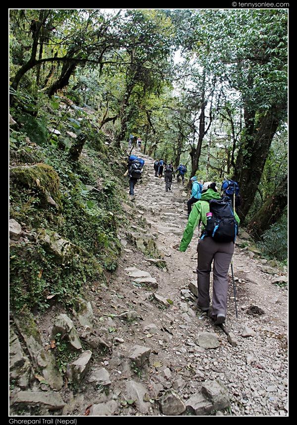 Ghorepani Trail (16)