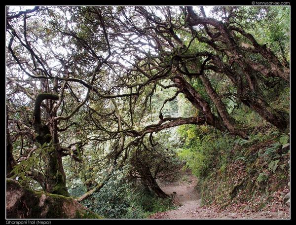 Ghorepani Trail (19)