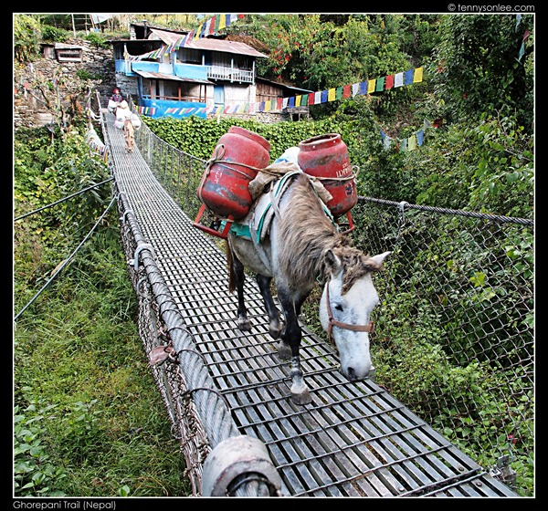 Ghorepani Trail (3)