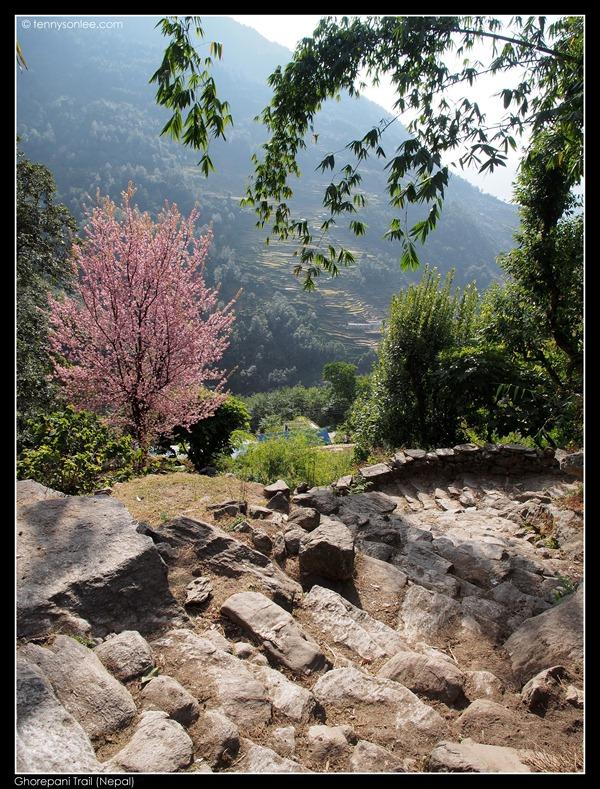 Ghorepani Trail (9)