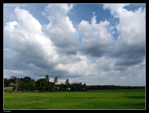 Melaka Padi Field 2