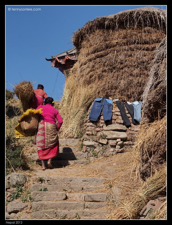 Nepalese (17)
