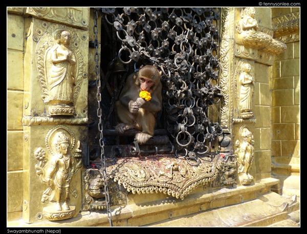 Swayambhunath (5)